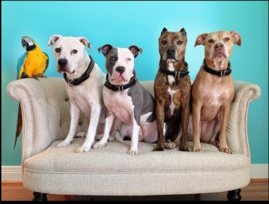 BSL..What Is It GoodFor?