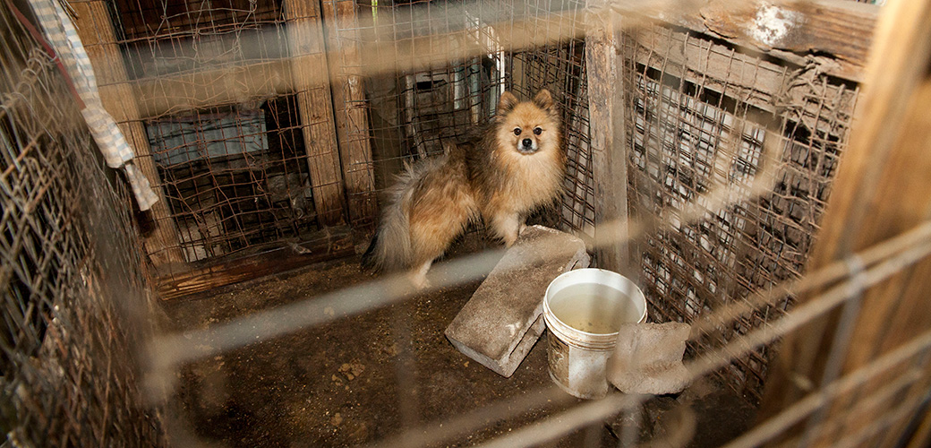 Puppy Mill Action Week – Please Spread the Word