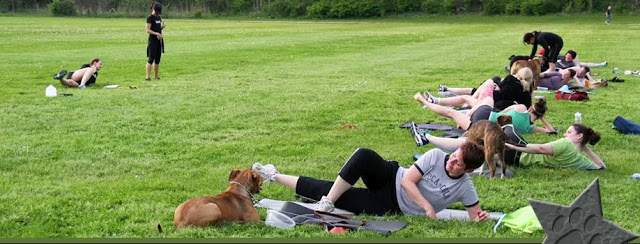 Dog Friendly Workout: Thank Dog NEO Bootcamp