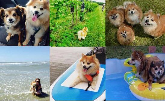 5 Dog-Friendly Activities this Summer