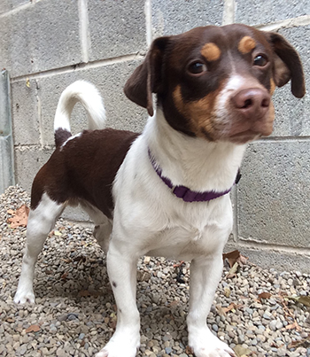 CLE Adoptable Canine of theWeek