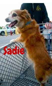 sadie1